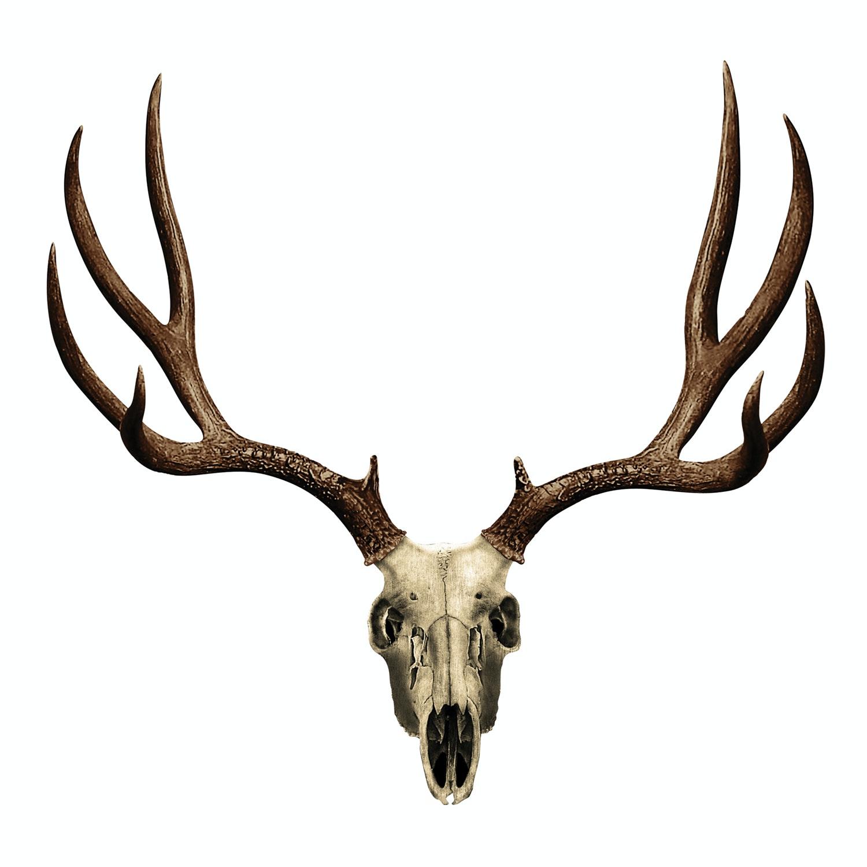Mule Deer Skull Decal Mossy Oak Graphics