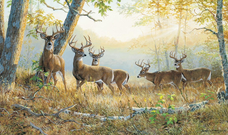 Dream Team Summeru0027s Edge Whitetail Deer Wall Graphic Part 56