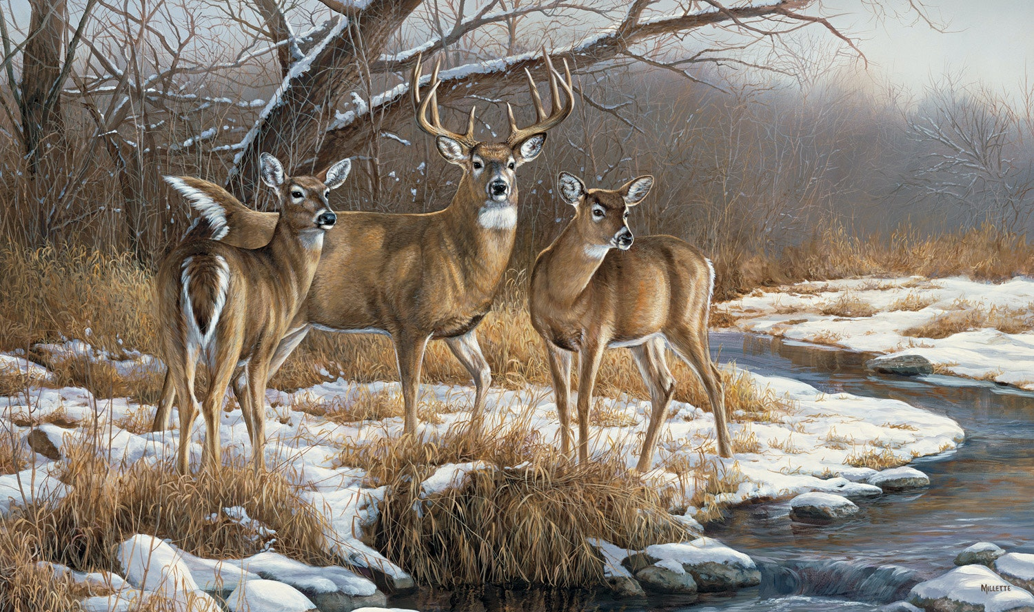 Watchful Trio Whitetail Deer Wall Graphic