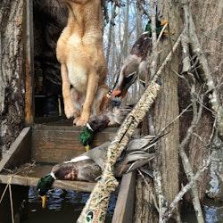 Camo Shotgun Wrap Mossy Oak Shotgun Skins Mossy Oak