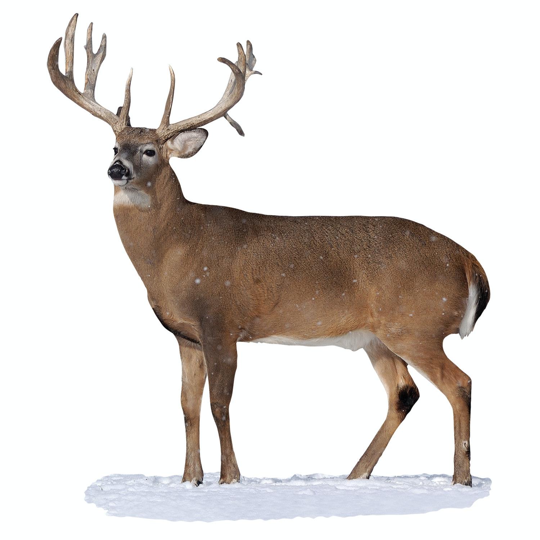 Broadside Whitetail Buck Cutout Mossy Oak Graphics