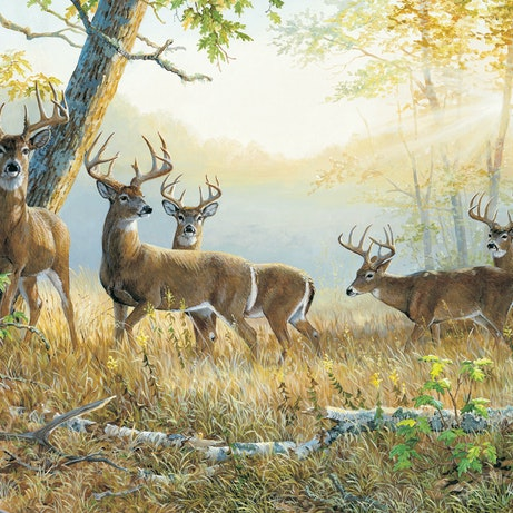 Dream Team Summer S Edge Whitetail Deer Wall Graphic