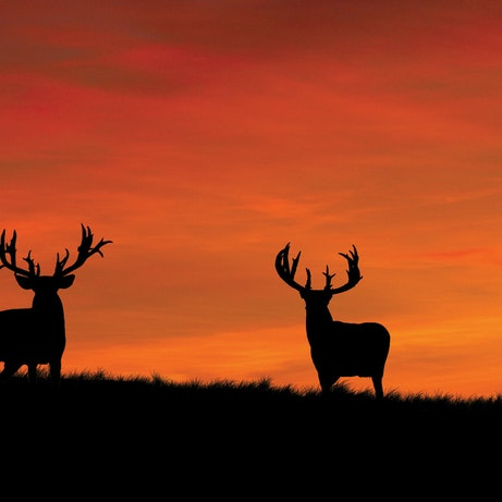 Whitetail Silhouettes At Sunrise Wall Graphic Mossy Oak